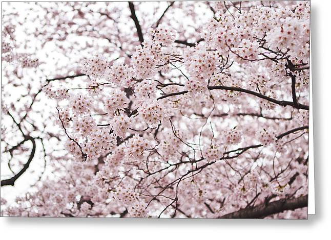 Pink Flower Branch Greeting Cards - Pink Cherry Blossom Greeting Card by Ariane Moshayedi
