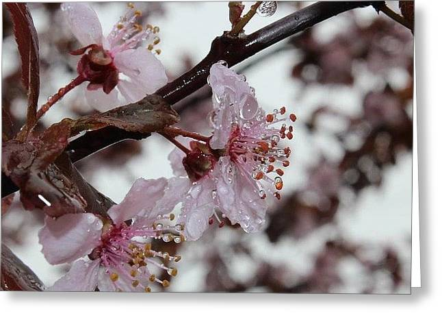 Pink Cherry Ice Greeting Card by Toni Jackson
