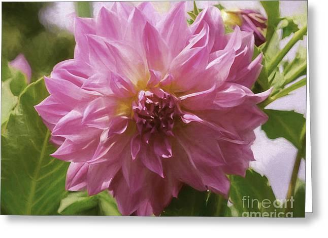 Mystic Art Greeting Cards - Pink Dahlia Greeting Card by Joe Geraci