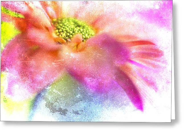 Vibrant Photographs Greeting Cards - Pink Daisy on Blue Greeting Card by Carol Leigh