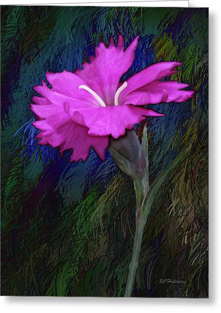 Halinar Greeting Cards - Pink Dianthus  Greeting Card by Joe Halinar