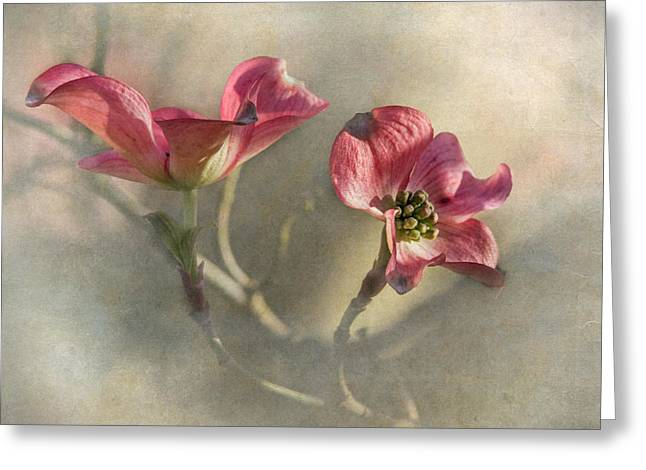 Dogwood Blossom Greeting Cards - Pink Dogwood Greeting Card by Angie Vogel