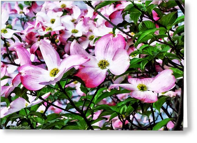Florals Greeting Cards - Pink Dogwood Blossoms Greeting Card by Susan Savad