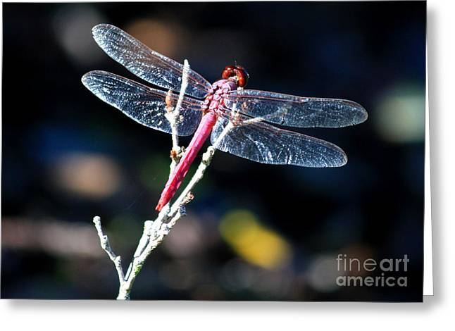 Sparking Greeting Cards - Pink Dragonfly Greeting Card by Carol Groenen