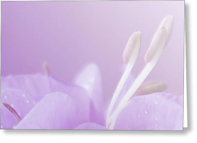Reach Greeting Cards - Pink Dream.. Greeting Card by Nina Stavlund