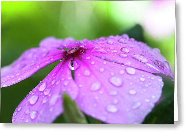 Pink Droplets Greeting Card by Sean Davey