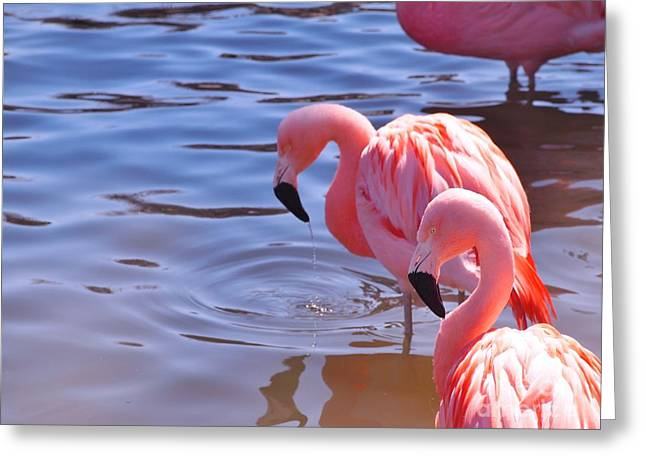 Rosamond Greeting Cards - Pink Flamingo happiness Greeting Card by Jennifer Craft