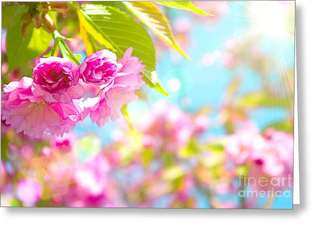 Pink  Flower Beautiful Greeting Card by Boon Mee