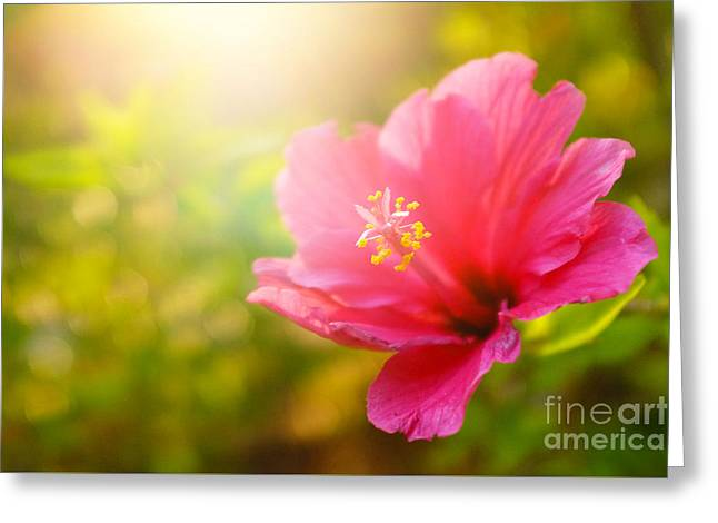 Pink Flower Greeting Card by Carlos Caetano