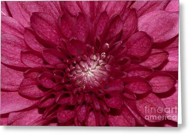 Pink Greeting Cards - Pink Flower Greeting Card by Carolyn Brown