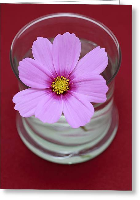 Harvest Art Greeting Cards - Pink Flower Greeting Card by Frank Tschakert