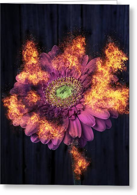 Pink Flower In Flames Greeting Card by Garry Gay