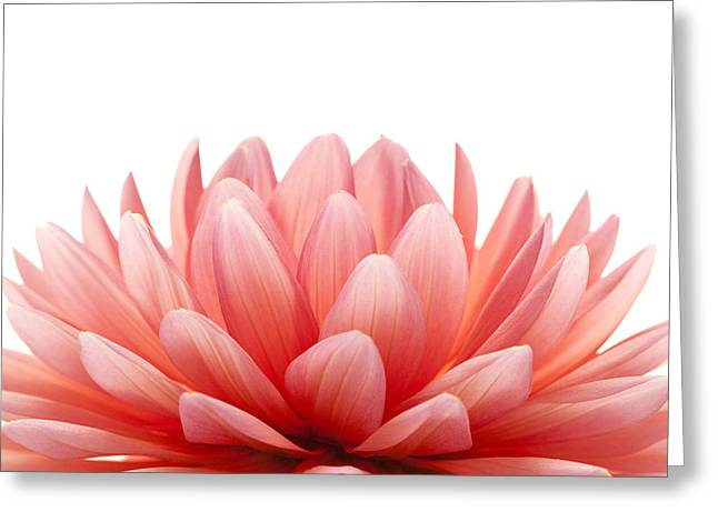 Matt Greeting Cards - Pink flower Greeting Card by Matt J