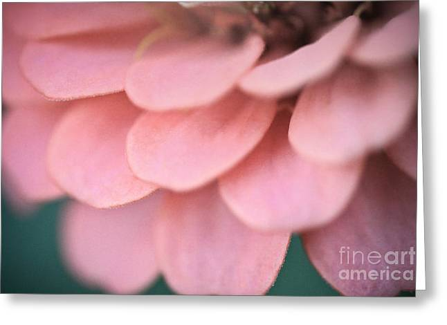 Pink Flower Petals Greeting Card by Ryan Kelly