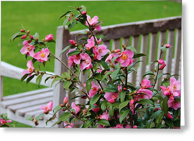 Pink Flowers By The Bench Greeting Card by Cynthia Guinn