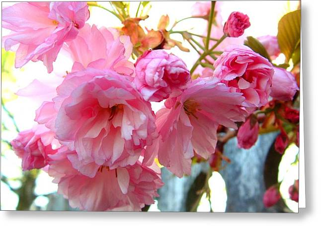 Pink Flowers Greeting Card by D R TeesT