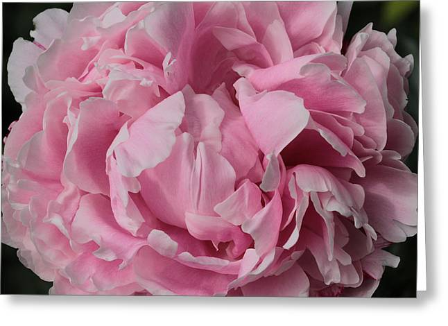 Womanly Greeting Cards - Pink Gem  Greeting Card by Connie Handscomb