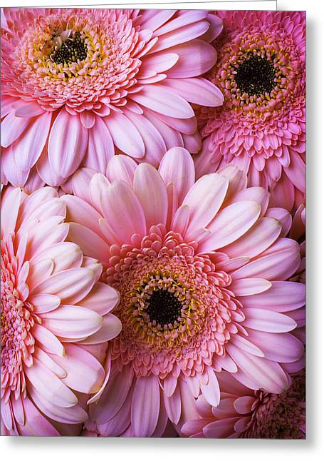 Pink Gerbera Daisy Bunch Greeting Card by Garry Gay