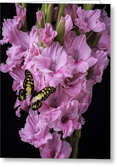 Glad Greeting Cards - Pink Glads And Butterfly Greeting Card by Garry Gay