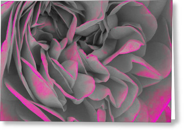 Rose Petals Greeting Cards - Pink Glow Greeting Card by Alex Art