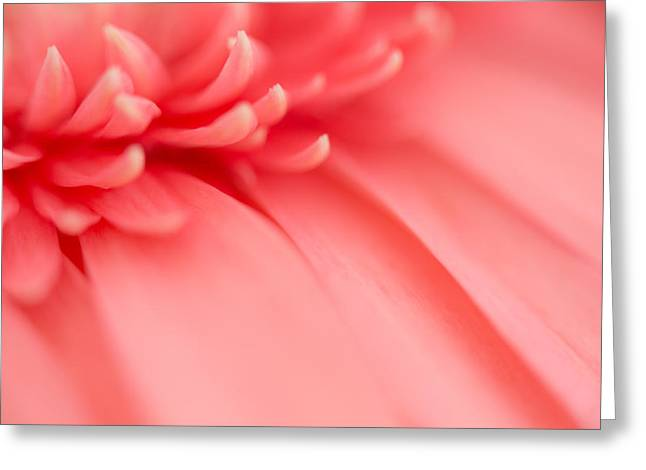 Close Focus Floral Greeting Cards - Pink Haze Greeting Card by Susan Pantuso