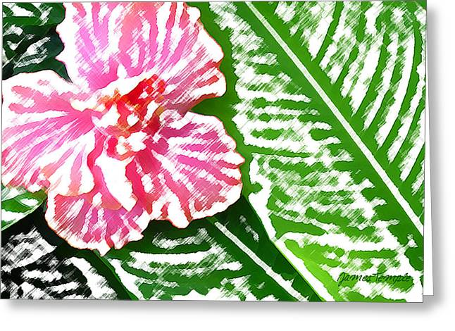 Pink Hibiscus Greeting Card by James Temple