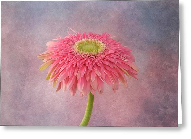 Textured Floral Greeting Cards - Pink in the Garden Greeting Card by Kim Hojnacki