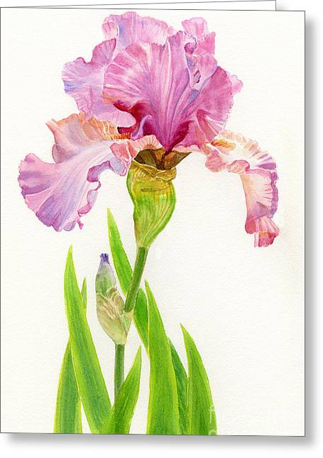 Pink Iris With Leaves Greeting Card by Sharon Freeman