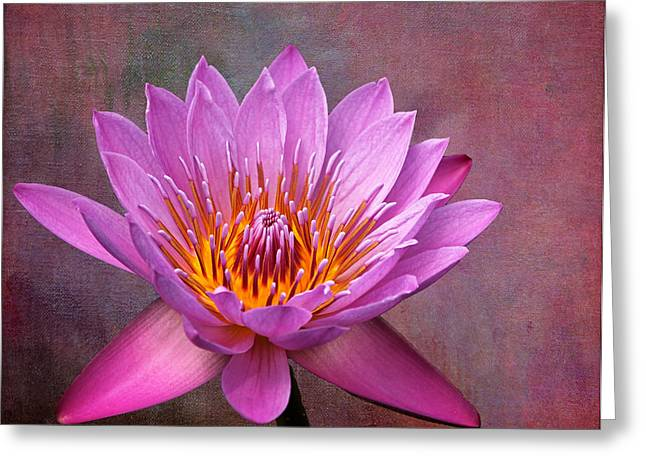 Decorate Greeting Cards - Pink Lady Greeting Card by Judy Vincent