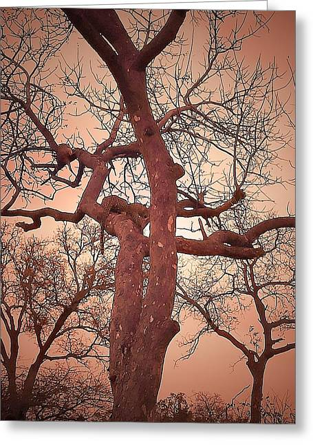 Leaves Greeting Cards - Pink Leopard Greeting Card by Lisa Byrne