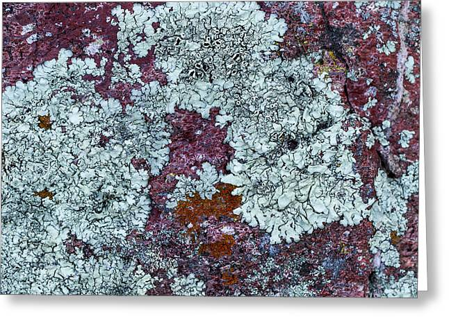 Alga Greeting Cards - Pink Lichen Greeting Card by Jean Noren