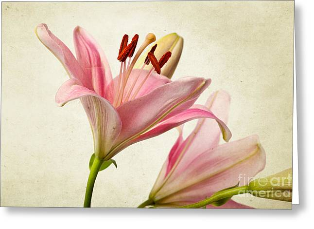 Pretty Photographs Greeting Cards - Pink Lilies Greeting Card by Nailia Schwarz