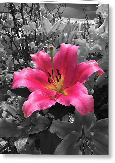 Pink Lily With Black And White Background Greeting Card by Anita Van Den Broek