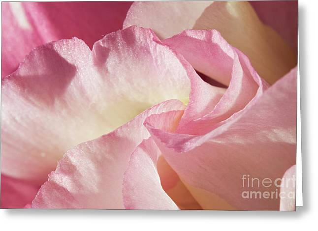 Angelini Greeting Cards - Pink Lisianthus visit www.AngeliniPhoto.com for more Greeting Card by Mary Angelini