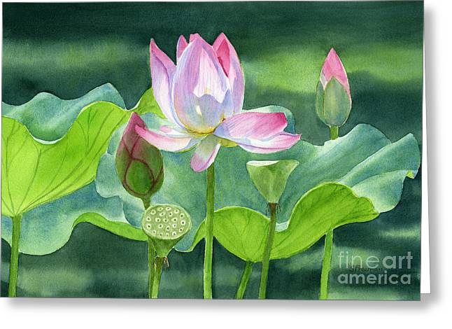 Lotus Blossoms Greeting Cards - Pink Lotus Blossom  Buds and Seed Pods Greeting Card by Sharon Freeman