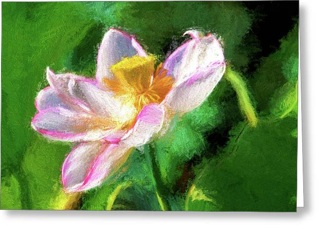 Pink Lotus Greeting Card by Geraldine Scull