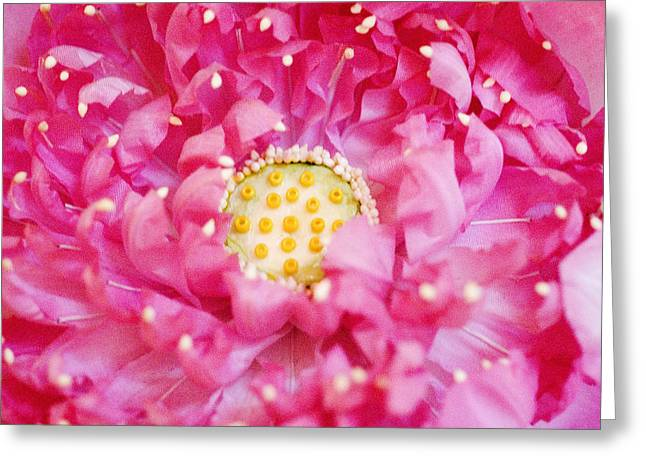 Bangkok Greeting Cards - Pink Lotus Greeting Card by Ray Laskowitz - Printscapes