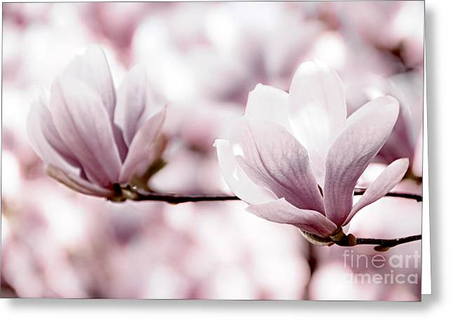Pink Flower Branch Photographs Greeting Cards - Pink Magnolia Greeting Card by Elena Elisseeva