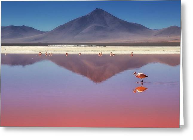 Bolivia Greeting Cards - Pink Morning Greeting Card by Margarita Chernilova