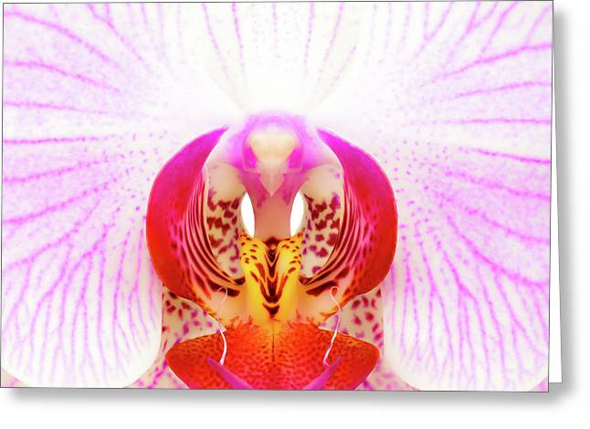 Pink Orchid Greeting Card by Dave Bowman