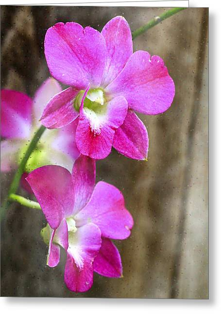Pink Flower Prints Greeting Cards - Pink Orchid Duo Greeting Card by Deborah Benoit
