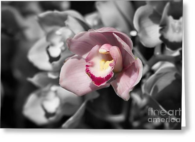 Flower Blossom Greeting Cards - Pink Orchid Selective Color Greeting Card by Terry Weaver