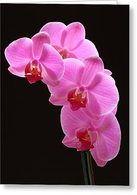 Orchid Artwork Greeting Cards - Pink Orchids Greeting Card by Juergen Roth