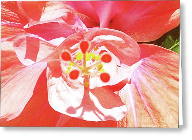 Hibiscus Coast Greeting Cards - Pink Paradise GP Greeting Card by Chris Andruskiewicz