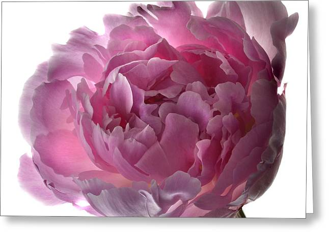 Pink Perfection Greeting Card by Terence Davis