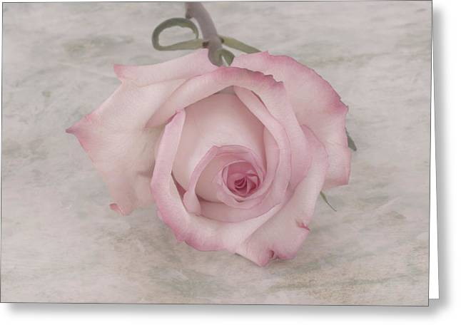 Powder Greeting Cards - Pink Rose Beauty  Greeting Card by Sandra Foster