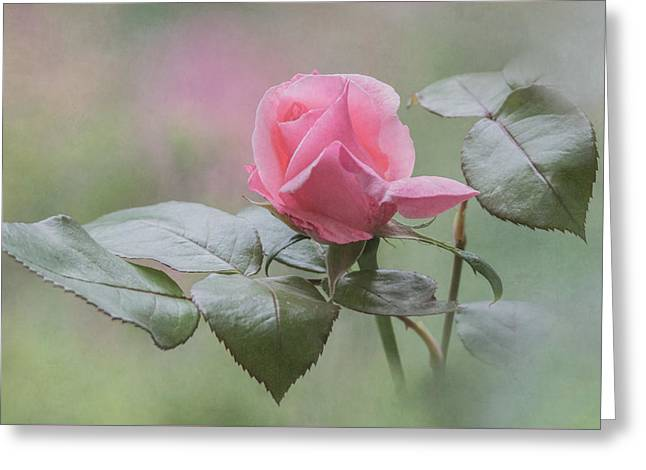 Rose Petals Greeting Cards - Pink Rose Bud Greeting Card by Angie Vogel