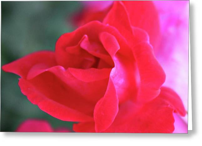 Rose Red City Greeting Cards - Pink Rose Greeting Card by Cathie Tyler