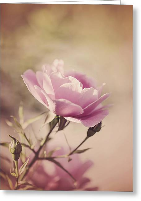 Pink Rose Greeting Card by Cindy Grundsten