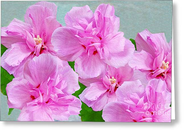 Flower Blossom Greeting Cards - Pink Rose of Sharon Greeting Card by Laura D Young